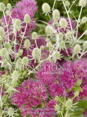 botanic stock photo Mixed