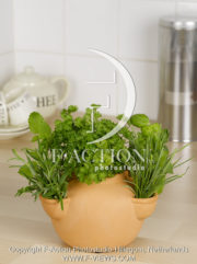 botanic stock photo Herbs
