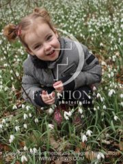 botanic stock photo Galanthus