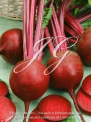 botanic stock photo Beet Rhonda
