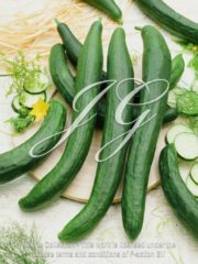 botanic stock photo Cucumber Chinese Long