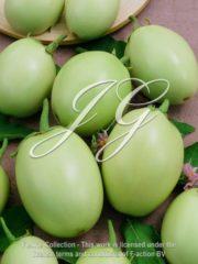 botanic stock photo Eggplant Apple Green