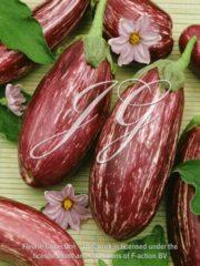 botanic stock photo Eggplant Listade di Gandia