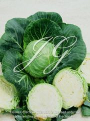 botanic stock photo White Cabbage F1 Candisa