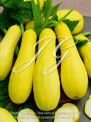 botanic stock photo Summer Squash Saffron Prolific