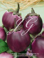 botanic stock photo Eggplant F1 Birga