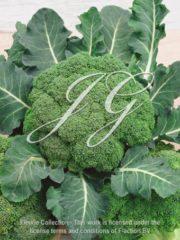 botanic stock photo Broccoli F1 Volta