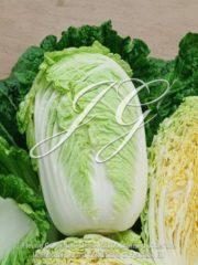 botanic stock photo Chinese Cabbage F1 Questar