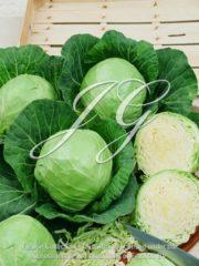 botanic stock photo White Cabbage F1 Golden Cross