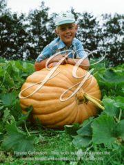 botanic stock photo Pumpkin Giant