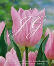 botanic stock photo Tulipa Rosalie